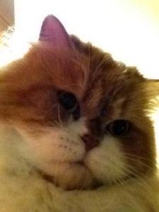 cat selfie 4
